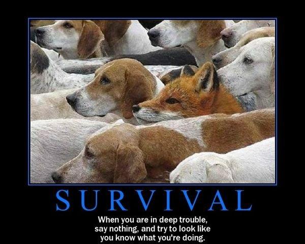 quote-survival
